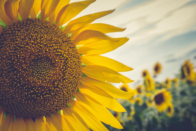 Esposizione alla luce solare: tutti i benefici sulla nostra salute